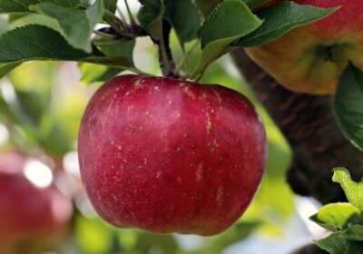Æbletræer/