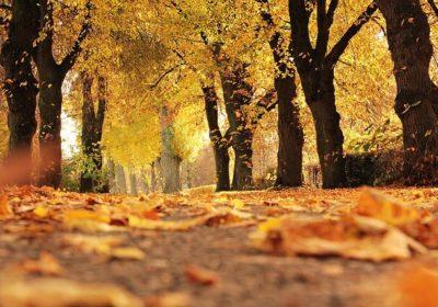 Løvsuger – Når bladene skal væk fra græs eller fliser
